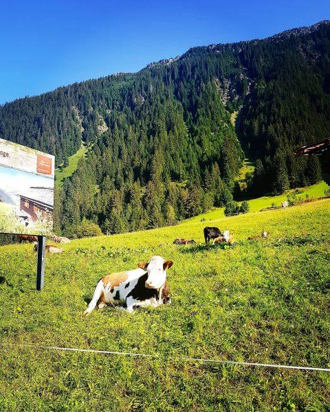 Praderas verdes en Montafon💚 #summer #paisaje #landschaftsfotografie #vidasilvestre #austria #österreich #montafon #mountain #instaphoto ...