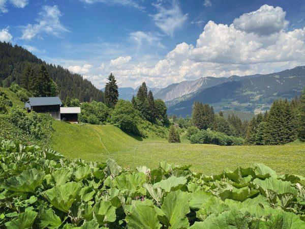 Nature LOVE 💚❤️ #nature#world_beautifulshots#photooftheday#beautiful#brillance_nature#nature_magic_#splendid_ig#ig_countryside#ig_allnature#fifty_shades_of_nature#nature_geography_#heart_imprint#nature_on_focus#quest_4_magic#planet.go#mood#mountain_world#mountain_lovers#visitvorarlberg#spring#wonderful#gauertal#moutainlovers#vorarlbergwandern# Tschagguns