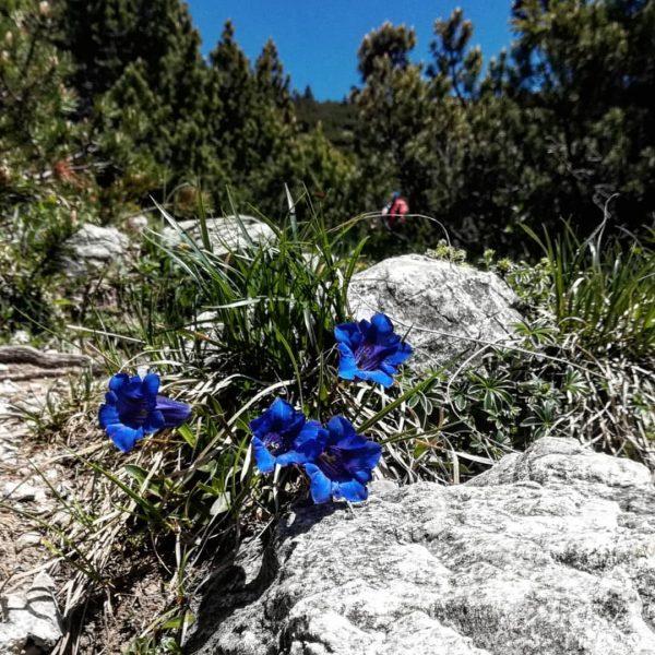 #weekendimpressions around #alpenstadtbludenz . . #hiking #mountains #springmoments #outdoortime #hoherfraßen #muttersberg #alpeels #klettersteigkellenegg #klettersteigstantonimmontafon #bergliebe #mountainbike #wandern