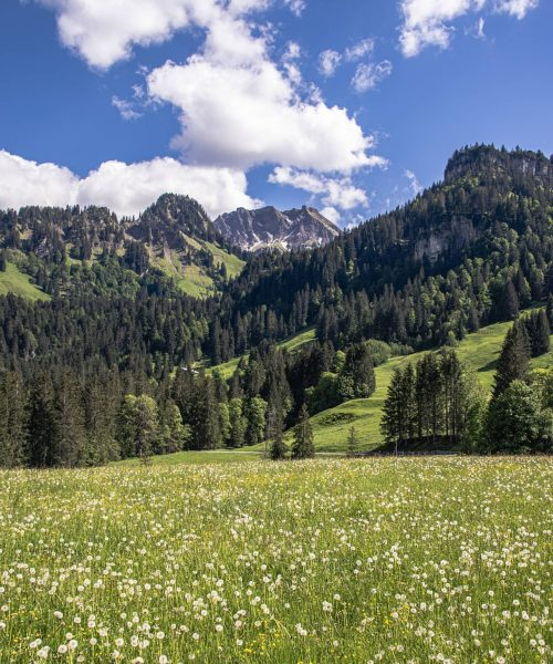 Diedamskopf⛰️ #vorarlberg #diedamskopf #mountainlake #alps #alpen #view #valley #top #beautiful #trees #mountain #berg ...