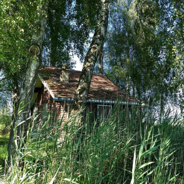 🐦Sehr gut versteckt, diese Hütte....aber natürlich habe ich sie trotzdem gefunden 😉🏚️🌳 . ...