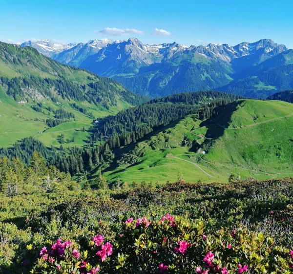 Alpenrosenblüte im Bregenzerwald: vom Hirschberg aus in den Hinterbregenzerwald #view #mountains #favoriteshot #bergliebe #nature #passion #visitbregenzerwald #visitvorarlberg...