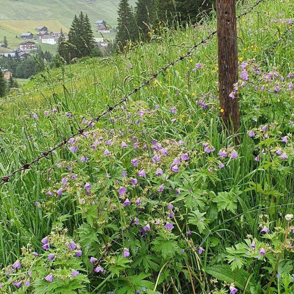 #Baad #Panoramaweg #Bärgunthütte #Kleinwalsertal #Bärguntbach #schöneWanderung