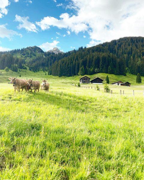 Liebe Gauertalhaus und Kristahof Freunde, wir genießen die Bergwelt mit ihren Alpen genauso ...