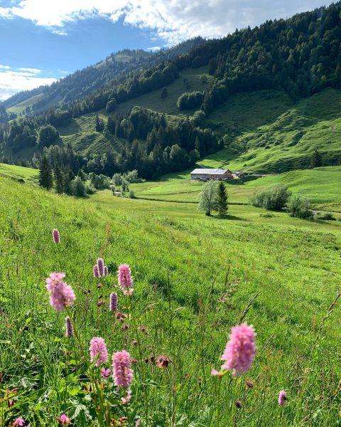 """""""Von den Alpen ⛰ unserer Heumilchbauern"""" 👉 Wissen, wo's herkommt! Im Sommer dürfen die Hühner 🐓🐓 von..."""