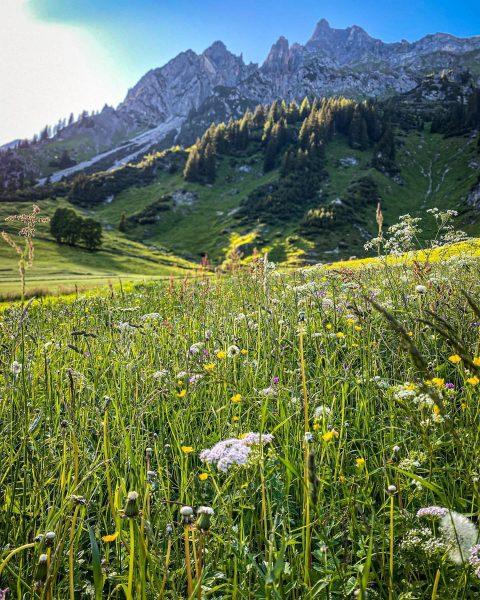 Traumhaft saftige Almwiesen, prachtvolle Blumen und natürliche Kräuter direkt neben dem Haus... Das ...