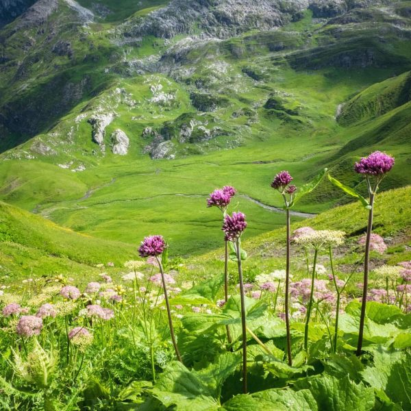 Over 2000 m above sea level and still so green and full of ...