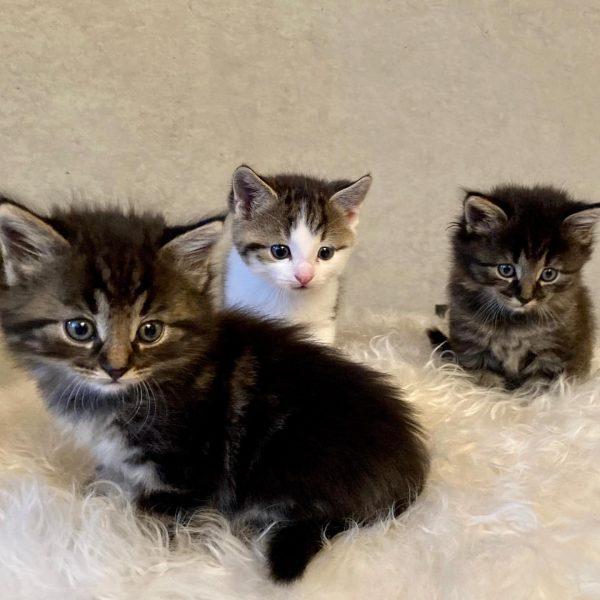 Fotoshooting😻#mymiezekatzen #lovecats #babykitten #sosüß😍 #visitbregenzerwald #visitvorarlberg #venividivorarlberg #schwarzenberg #wälderhausapartments