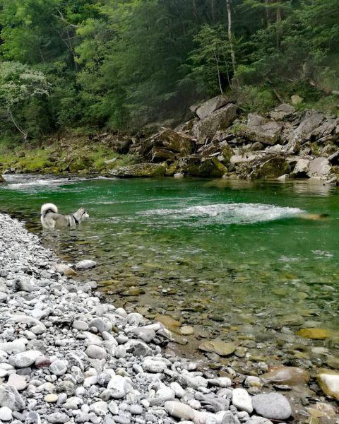 Die erste richtige Abkühlung den Sommer genossen🥰🥰 #alberschwende #bregenzerwald #vorarlberg #österreich #bregenzerach #bregenzerache ...