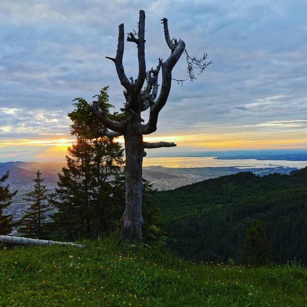 Sonnenuntergang 🌄💛 #sonnwend #längstertagdesjahres #aussichtgenießen #naturgenießen #naturephotograpy #naturpic #naturerleben #draussenamberg #draussenindernatur #bergmomente #bergliebe #bergluftinhaliern #outdoortime #outdooradventure #outdooraddict...