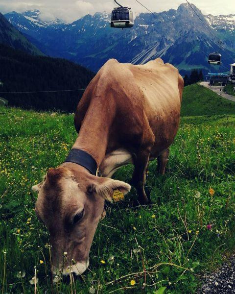 #homesweethome #bregenzerwald #vorarlberg #visitvorarlberg #visitbregenzerwald #ruhe #bergliebe #mylife #zuhause #outdoors #homesweethome #berg #mountains ...