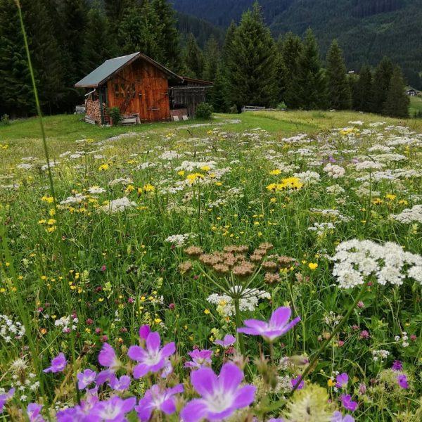 Die Natur in den Bergen ⛰️☀️ist oft überwältigend, und es wird niemals Langweilig, ...