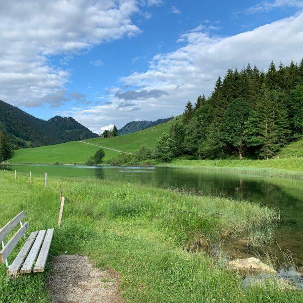 Unsere Alpgebiete sind Dank unserer Bauern bestens gepflegte Naturjuwele ... So auch das Lecknertal, wo auch der...