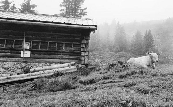 #wandern #hiking #wanderlust in den #alpen #alps #alpine #kleinwalsertal auf dem #Weg zum ...