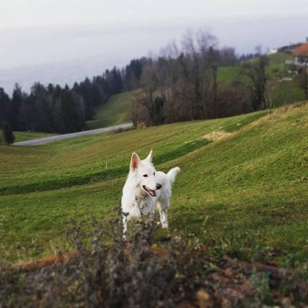 Queeny in denn bergen von Vorarlberg ❤💫⛰🏕 Hotel Schönblick