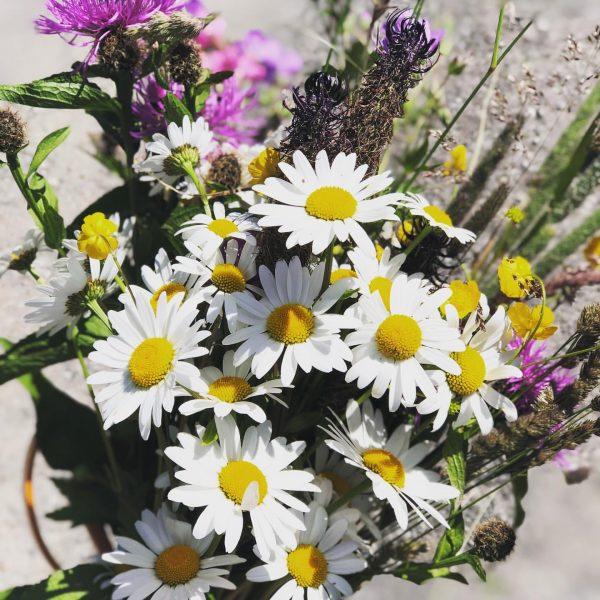 #selbstgepflückt #bergsommer #abaufdiewiese #flowers #sommer #sonne #nofilterneeded #nature Ski- und Wanderhotel Jägeralpe - ...