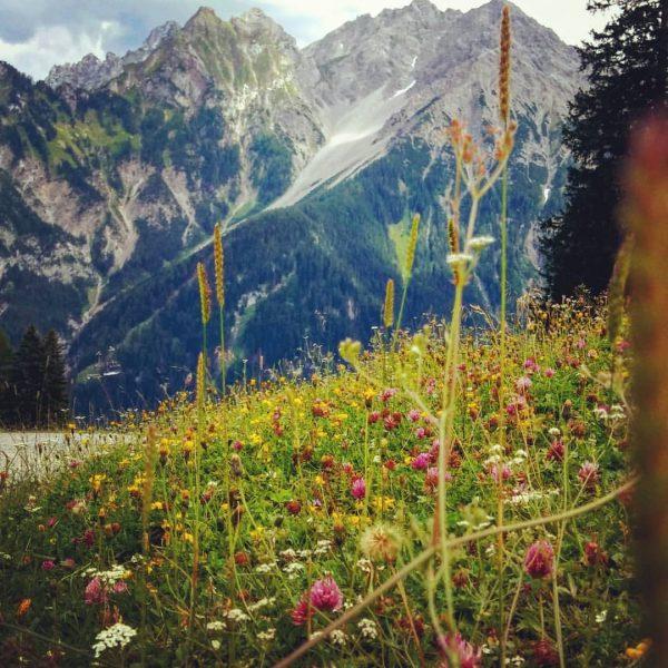 #bergwiese #brand #natursprüngeweg
