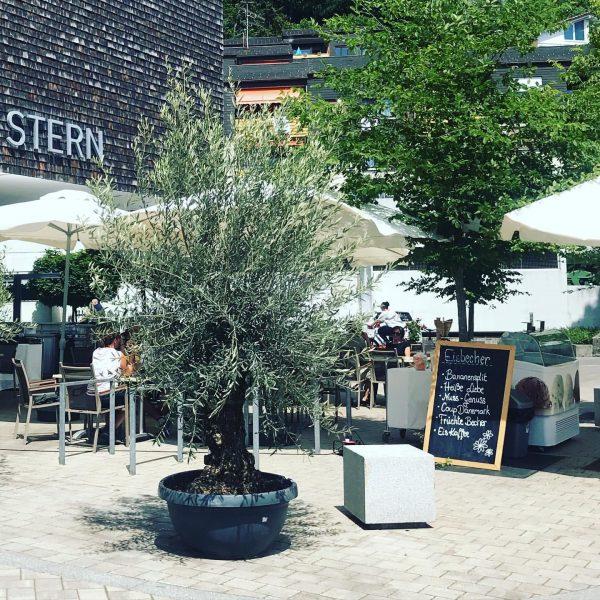 Genieße diesen wunderbar, sonnigen ☀️Tag bei uns im Gastgarten mit einem kühlen Getränk ...