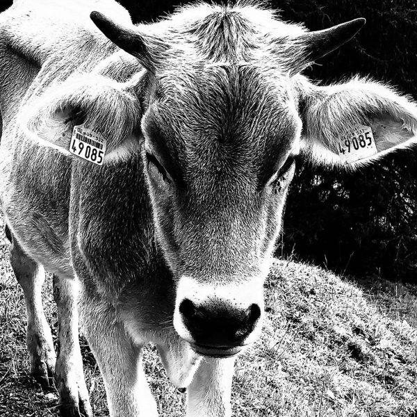 #einekuhmachtmuh #vielekühemachenmühe #allgäu #oberstdorf #kleinwalsertal #bergluftschnuppern