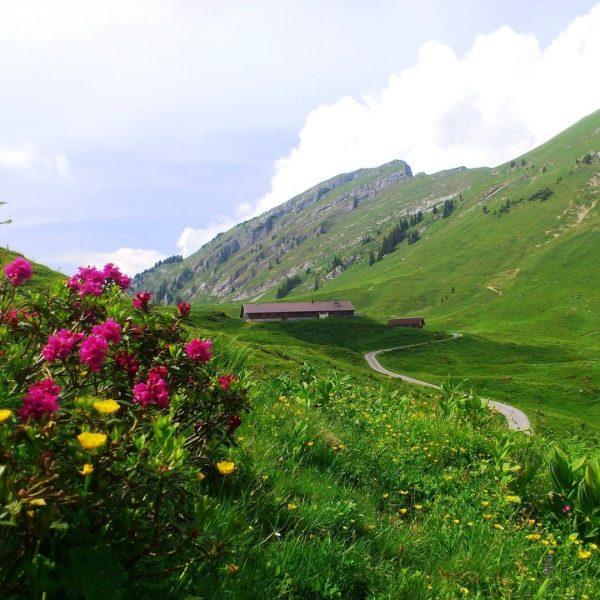 """#16 Sennalpe der KäseStrasse Bregenzerwald """"Alpe Obere"""". Die Alpe liegt in einem Hochsattel gebettet zwischen den Gipfeln..."""