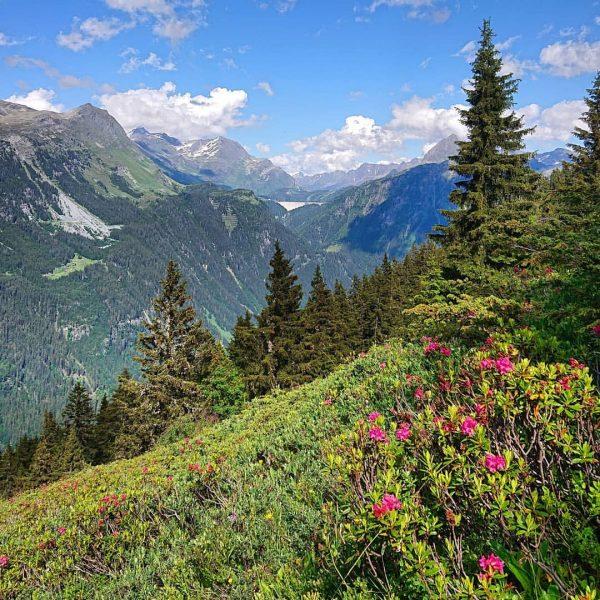 Unsere Lieblingsblumen blühen wieder in voller Pracht. 🌸 #alpenrosen #meinmontafon #montafonmoments #bergliebe #gaschurn ...