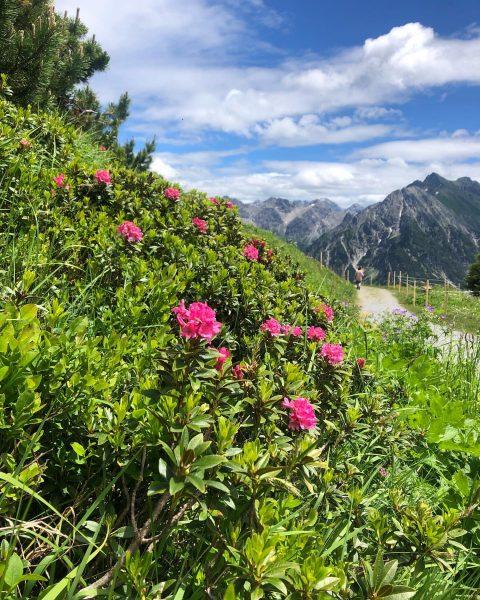 #alpenrosenblüte #bergwandern #familienzeit #einfachschön #haller's Geniesserhotel
