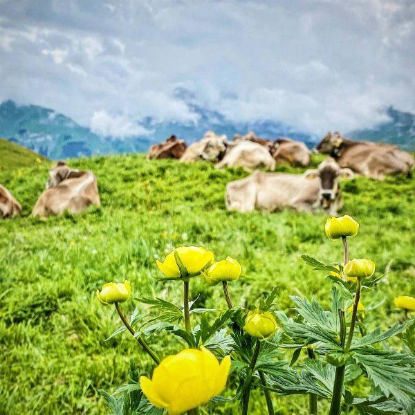 Schönen Start in die Woche von unserer Kriegeralpe! 💐 . #kriegeralpe #kiegerhorn #lechzuers ...