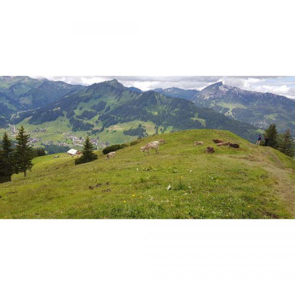#Kleinwalsertal #austria #hirschegg #riezlern #alps #alpen #wandern #hiking Alpe Kuhgehren