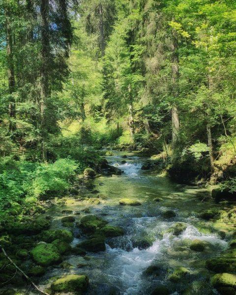 Schwarzwasserbach #kleinwalsertal #riezlern #wanderurlauber #erholungpur #schwarzwasserbach