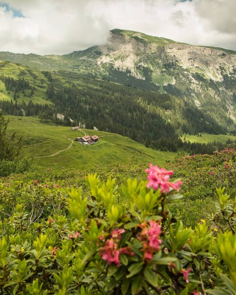 All good things are #Wildandfree 🐻 🌿 #luftherz #luftherzfofo #hoherifen #kleinwalsertal #austria #allgäufotograf #allgäuliebe #homeiswhereyourheartis #homeiswherethemountainsare #gooutandplay...