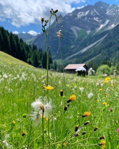 Buntewiesen im Wildental #wildental #almwiesen #kleinwalsertal #mittelberg #wandern #erholungpur Mittelberg Kleinwalsertal