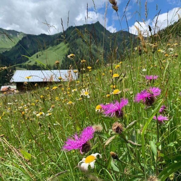 Kurz vor Baad #kleinwalsertal #mittelberg #wanderurlaub #erholungpur #genusswandern Baad, Vorarlberg, Austria