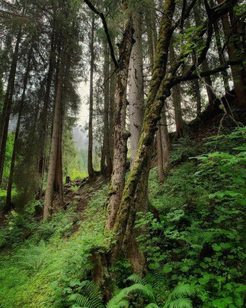 Nach dem Regen im Wald #kleinwalsertal #mittelberg #erholungpur #wanderurlaub #wolkenatmosphäre #feuchterwald Mittelberg Kleinwalsertal