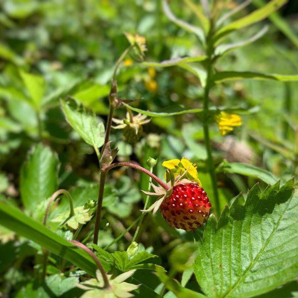 Klein aber süß #kleinwalsertal #mittelberg #wanderurlaub #erholungpur #genusswandern