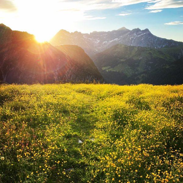 Durchs Blumenmeer dem Sonnenuntergang entgegen. Heute darfs ein bisschen mehr Kitsch sein! #hausbraunarl ...