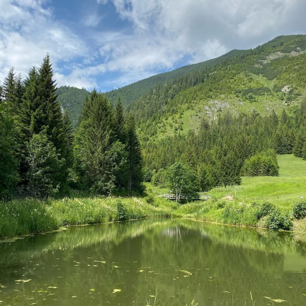 Es grünt so grünt #muttersberg #natur #teich #fish #fisch #amberg #venividivorarlberg #relax Muttersberg, ...