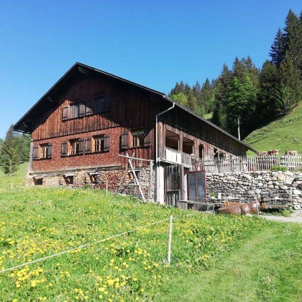 """#20 Sennalpe der KäseStrasse Bregenzerwald """"Alpe Rüschere"""". Kurz vor dem Vorsäß Schönenbach, links ..."""