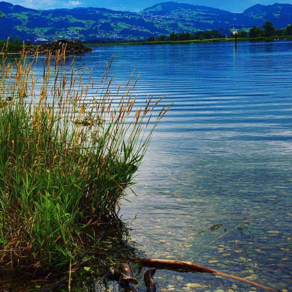Naturschutzgebiet Rheindelta #rheindelta #fussach #bodensee #schwäbischesmeer #alpenrhein #österreich #österreich🇦🇹 #austria🇦🇹 #spaziergang #wasser #wasserspiegelung ...