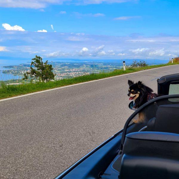 Kleiner Ausflug am Samstag mit dem Cabrio #eichenberg #pfänder #bregenz #bodensee #lakeconstance #lakeofconstance ...