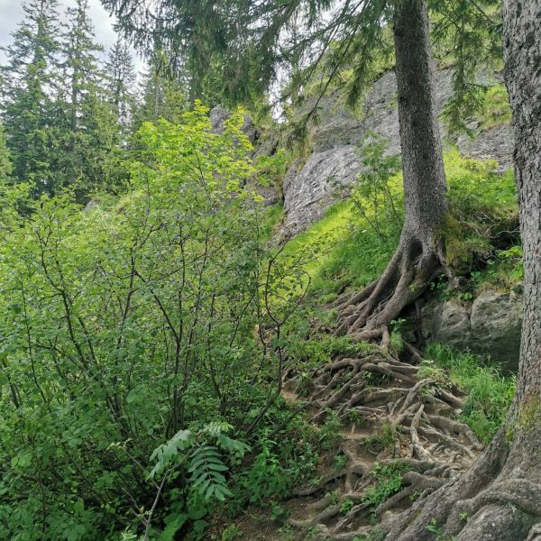 Min weag Etappe 4 . . . #minweag #hittisau #lecknertal #hochgrat #hochhäderich #austria ...