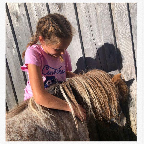 Maja und Willi - die Lieblinge von jedem Kind! 💕 . . #ponys ...