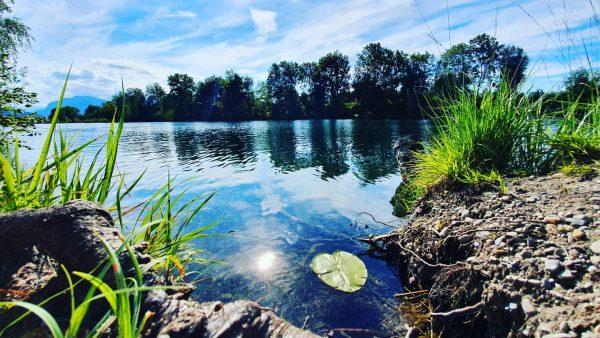 Unser Natur- und Naherholungsparadies Alter Rhein im Sommer! #hohenems #emspiriert #natur #sommer #bodenseevorarlbergtourismus #urlaubzuhause