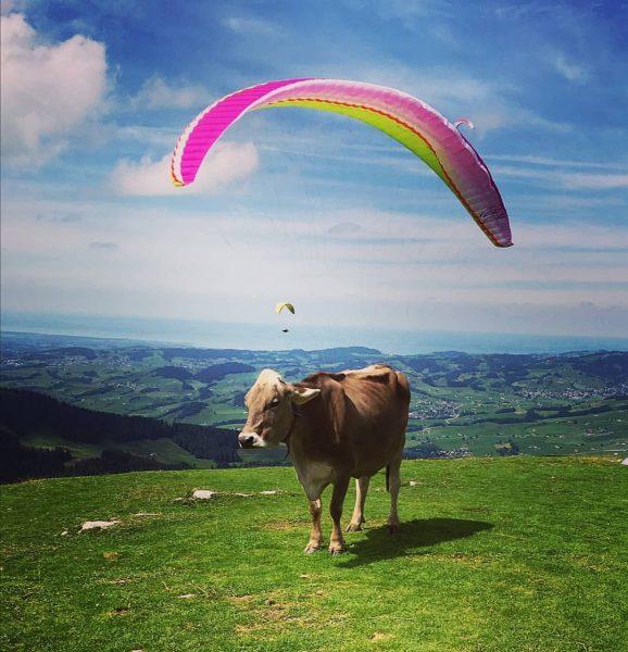#bergliebe # #homesweethome #bregenzerwald #vorarlberg #visitvorarlberg #visitbregenzerwald #ruhe #waldtiere #kuh #fly #fliegen #colors ...