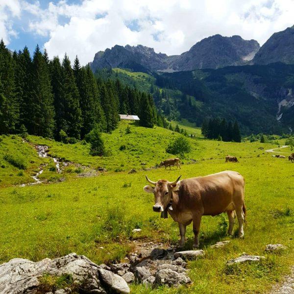 Kleinwalsertal #wandern #wanderung #kleinwalsertal #hiking #urlaub #alpen #alpes Kleinwalsertal Österreich