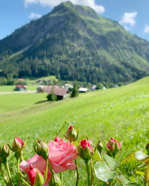 Rosen am Rosenhofhotel #kleinwalsertal #rmittelberg #wanderurlauber #erholungpur #hotel #gastfreundschaft