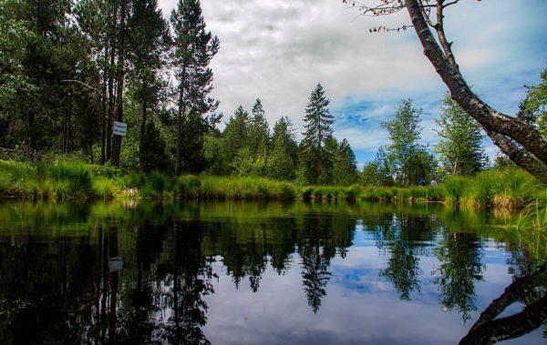 Wildrosenmoos #wildrosenmoos #hochmoor #sulzberg #bregenzerwald #bregenzerwald🌲🌲 #österreich #austria #austria🇦🇹 #vorarlberg #naturfotografie #natur #naturephotography ...