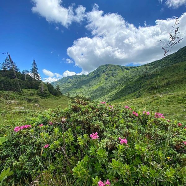 Wanderung von der Auenhütte über die Melköde, Schwarzwasserhütte,Steinmandl,Grünhorn,Ochsenhofer Scharte,schwarzwasserhütte , Melköde und zur Auenhütte zurück. 🔛19,25 km...