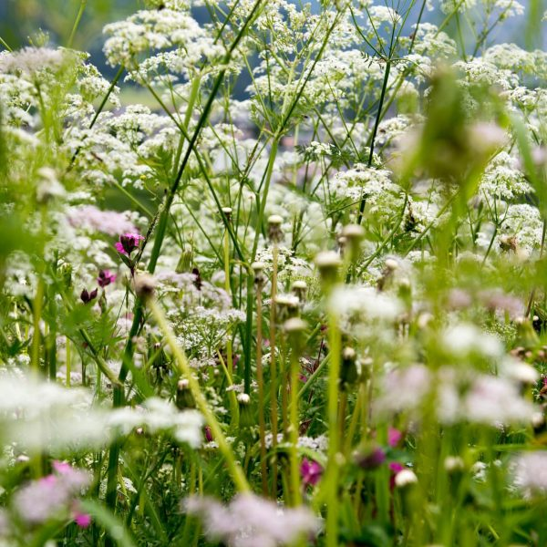 Die Mutter Natur beschenkt uns Tag für Tag in all unseren Facetten mit ihrer Fülle und Kraft....