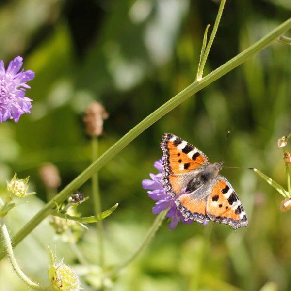 Schönen Start ins Wochenende. Wenn ihr noch mehr Schmetterlinge sehen wollt, schaut mal ...