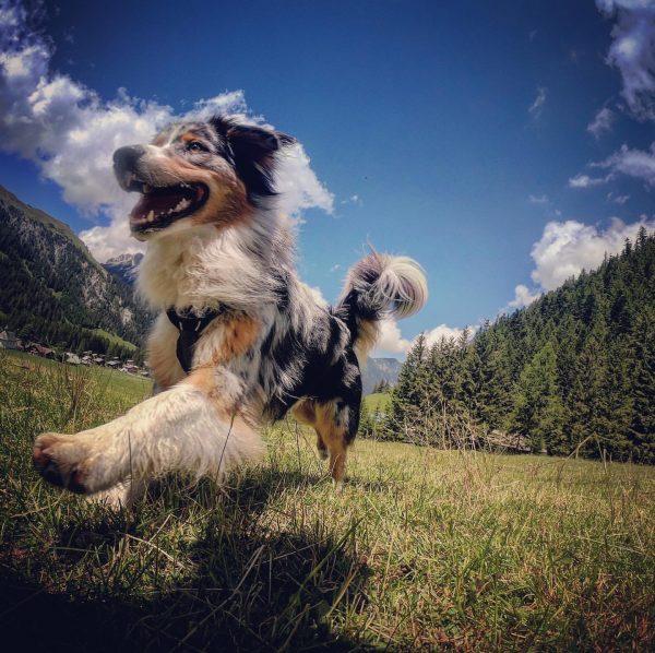 #himmlisch #nenzingerhimmel #nofilter #goprophotography #homesweethome #homebase #outdoorphotography #outdoorfreak #jumpingdog #sommer2020 #venividivorarlberg #heimatliebe #nicehike ...